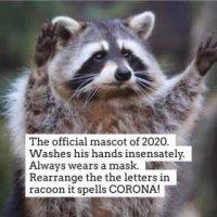 racoon.jpg