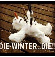 VIBE-Vixen-Cold-Weather-Meme.jpg