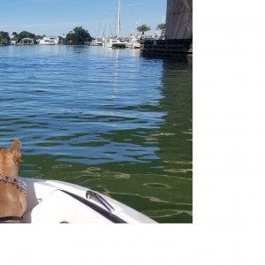 PupsBoating.jpg